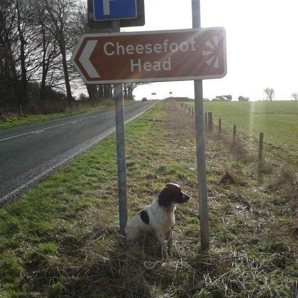 Dog walk at Cheesefoot Head