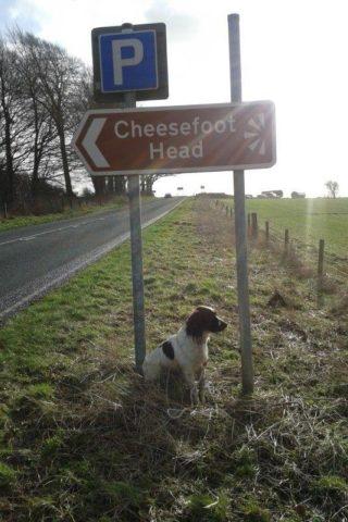 Dog walk at Cheesefoot Head photo