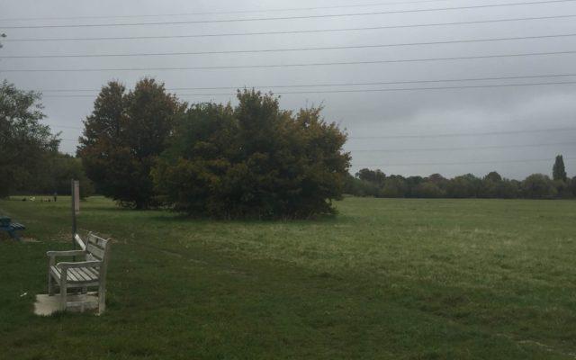 Chertsey Meads Dog walk in Surrey