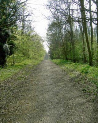 Dog walk at Chicksands Wood