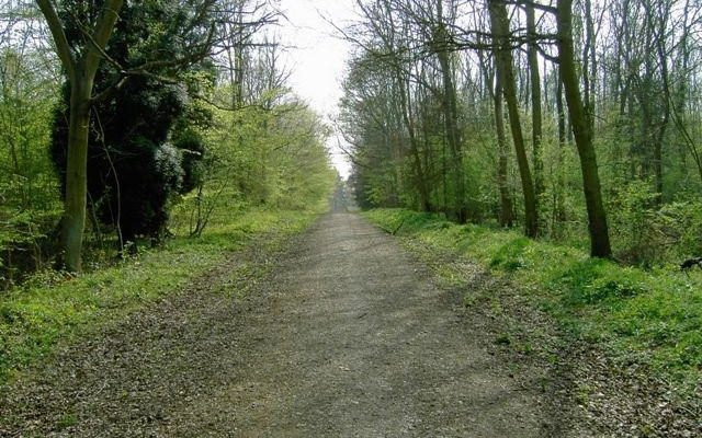Chicksands Wood Dog walk in Bedfordshire