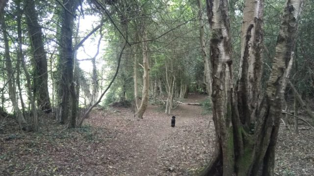 Dog walk at Chilworth Common