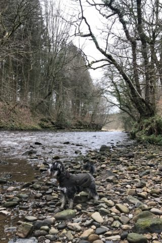 Dog walk at Chopwell Woods photo