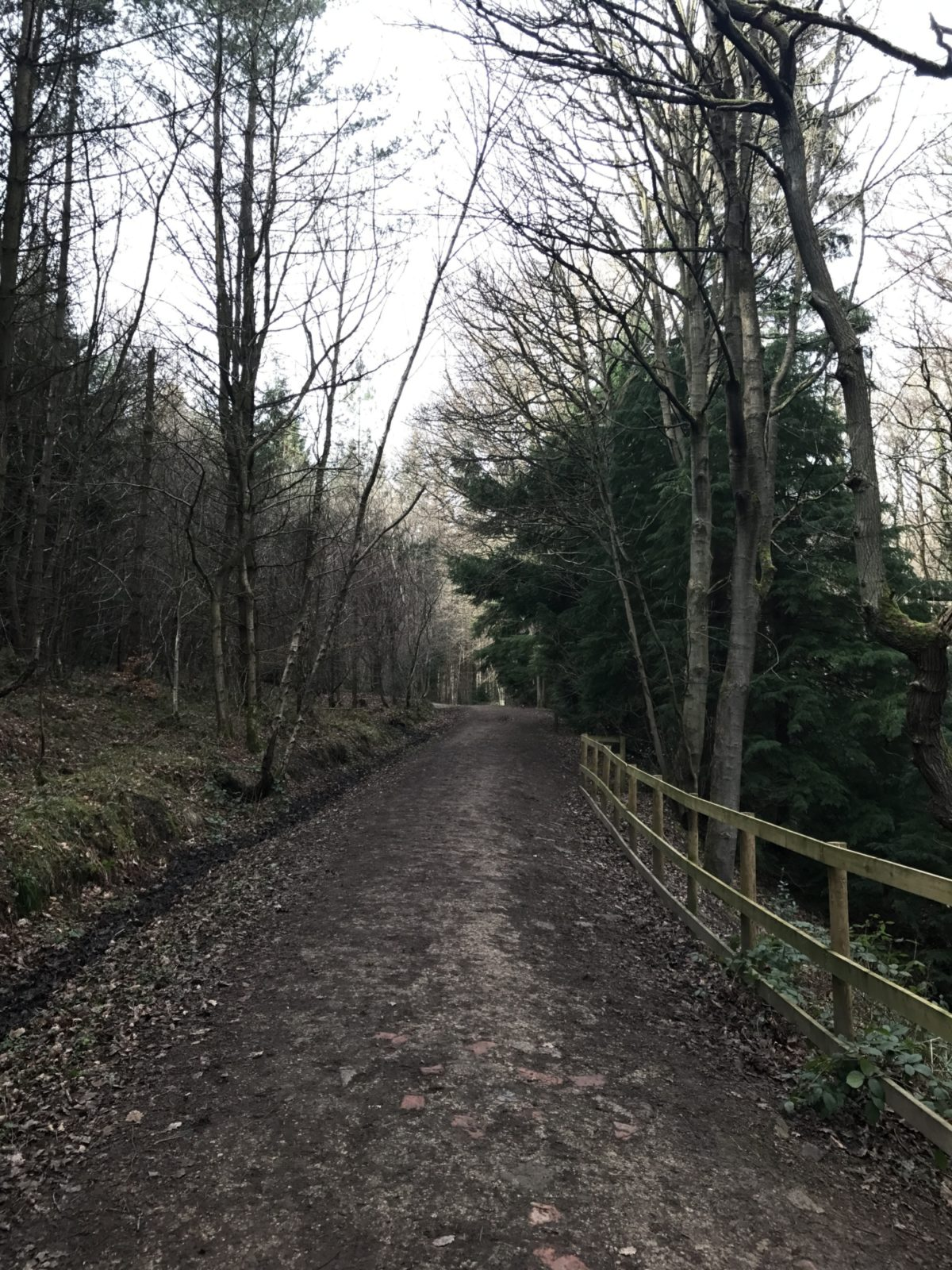 Chopwell Woods large photo 2