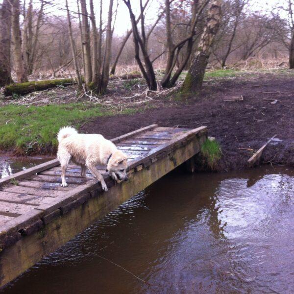 Chorlton To Sale Waterpark photo 4