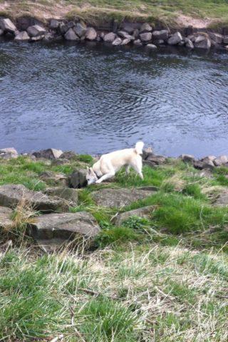 Dog walk at Chorlton To Sale Waterpark photo