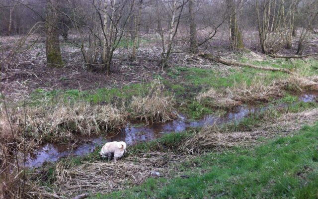 Chorlton To Sale Waterpark Dog walk in Lancashire