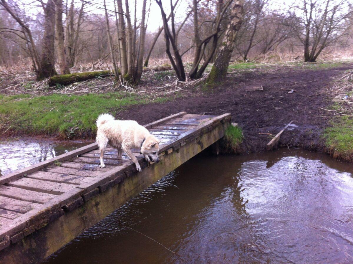 Chorlton To Sale Waterpark large photo 4