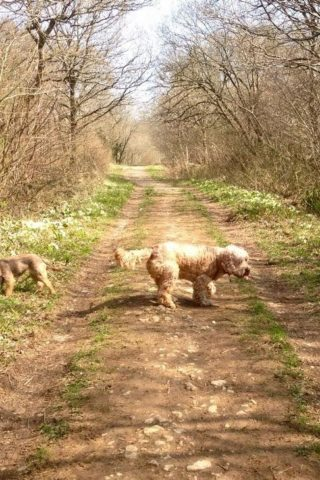 Dog walk at Clanger And Picket Woods photo
