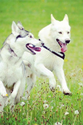 Dog walk at Claybury Woods & Park photo