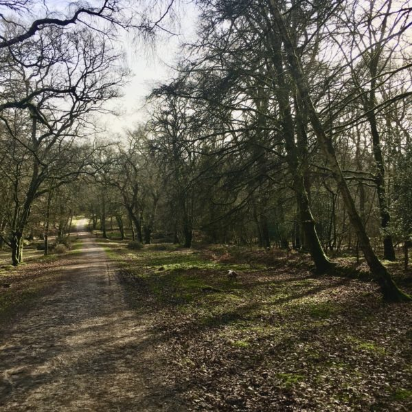 Clayhill (Lyndhurst) to Denny Wood, New Forest photo 2