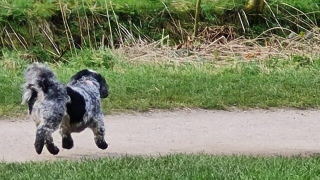 Dog walk at Clayton  Vale