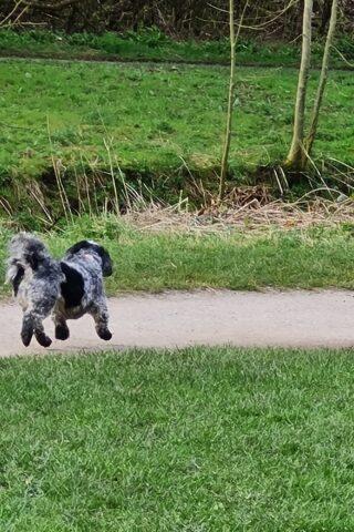 Dog walk at Clayton  Vale photo