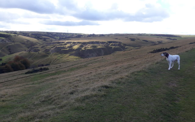 Cleeve Hill Dog walk in Gloucestershire