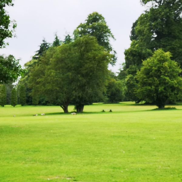 Clumber Park photo 1