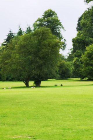 Dog walk at Clumber Park photo