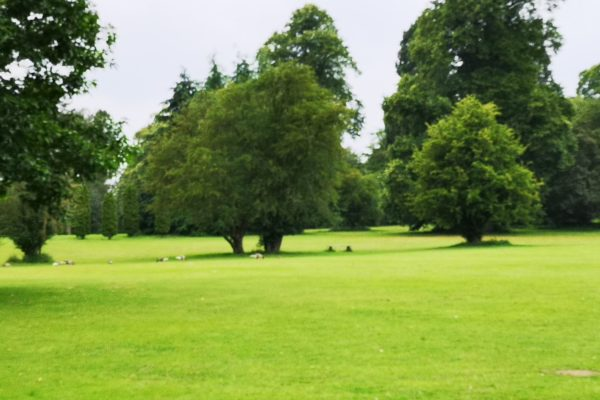 Clumber Parkphoto