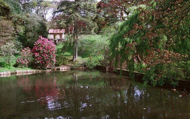 Clyne Gardens, Mayals, Swansea Dog walk in Swansea