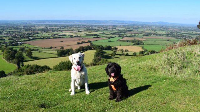 Dog walk at Coaley Peak