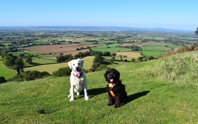 Coaley Peak Dog walk in Gloucestershire