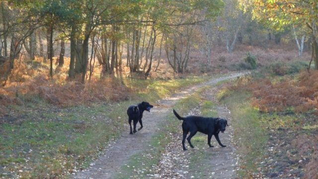 Dog walk at Coastguards Cottages, Dunwich Heath