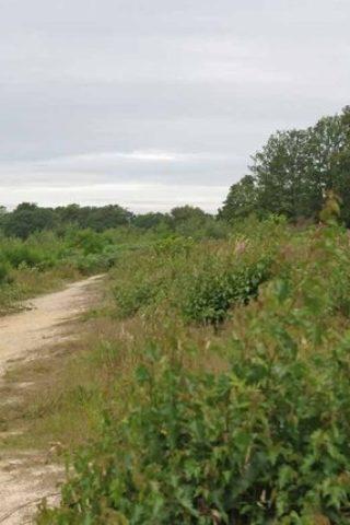 Dog walk at Cockaynes Wood Nature Reserve photo