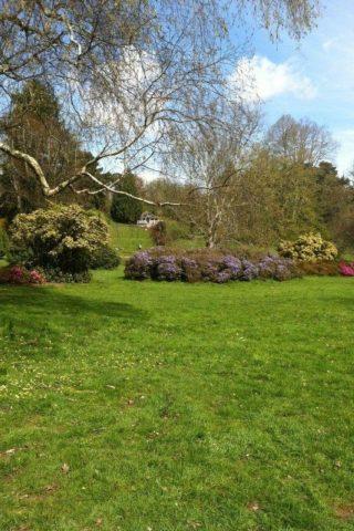 Dog walk at Cockington Country Park photo