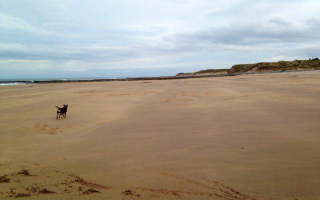 Cocklawburn Beach Dog walk in Northumberland