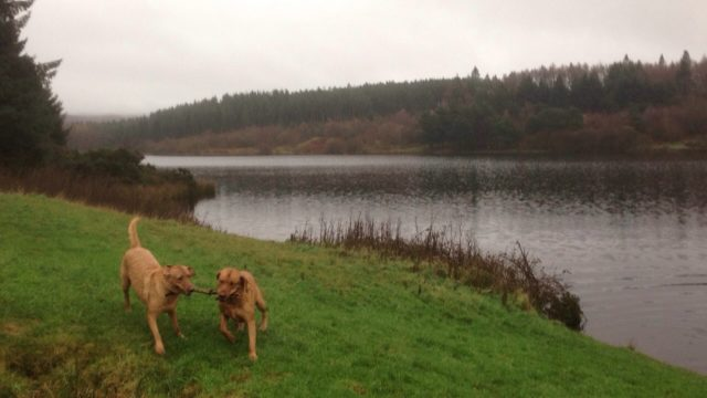 Dog walk at Cod Beck, Osmotherley
