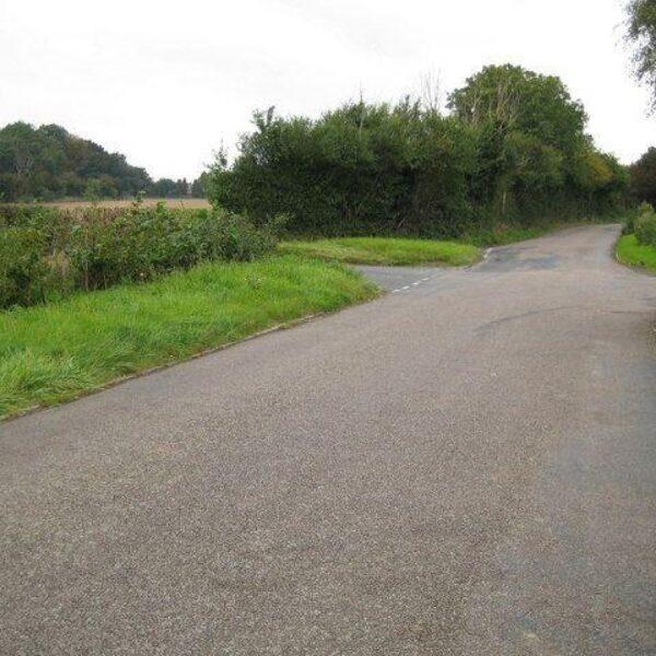 Dog walk at Colney Heath