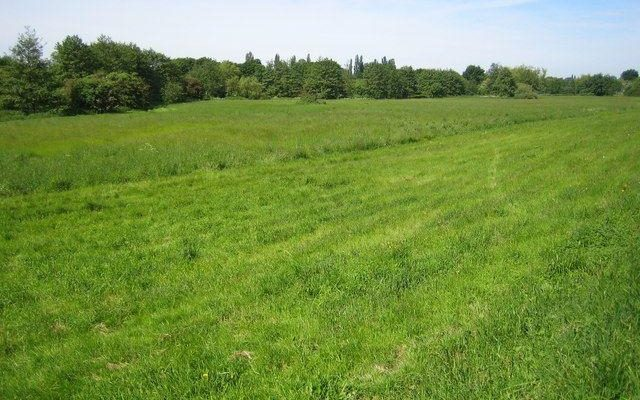 Colney Heath Dog walk in Hertfordshire