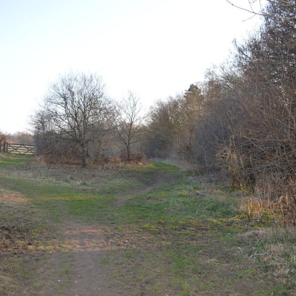 Dog walk at The Commons Nature Reserve, Welwyn Garden City