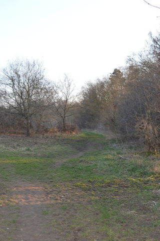 Dog walk at The Commons Nature Reserve, Welwyn Garden City photo