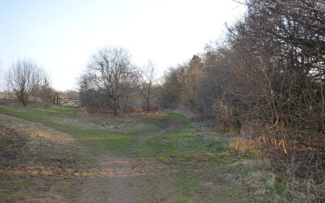 The Commons Nature Reserve, Welwyn Garden City Dog walk in Hertfordshire