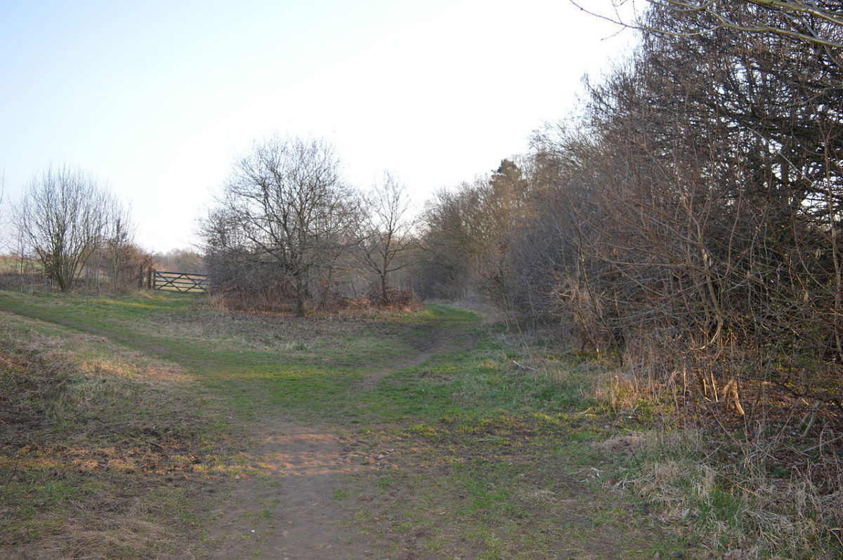 The Commons Nature Reserve, Welwyn Garden City large photo 1