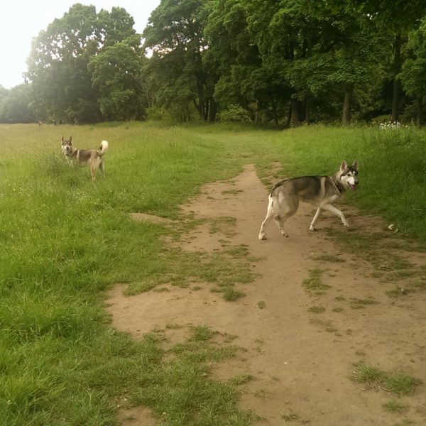 Dog walk at Conyngham Hall Trail