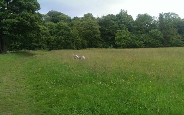 Conyngham Hall Trail Dog walk in Yorkshire (North)