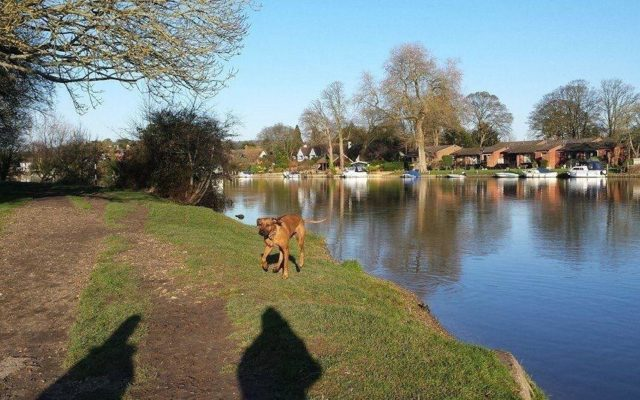 Cookham Dog walk in Berkshire