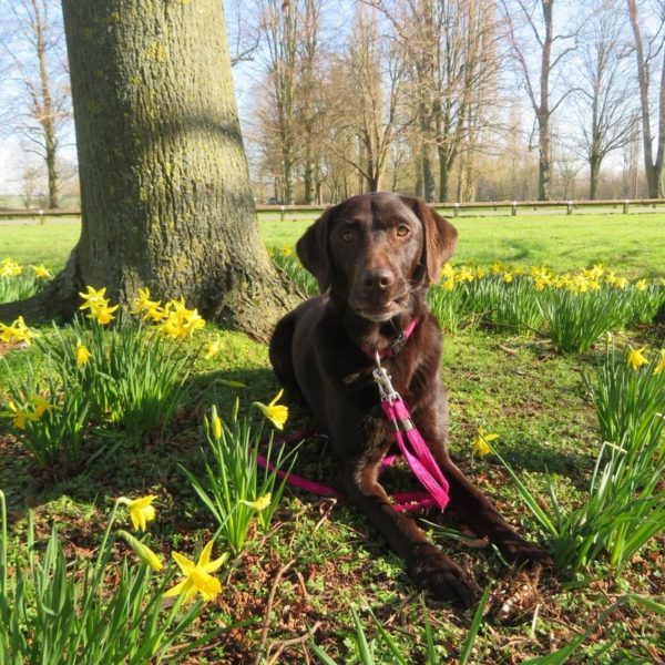 Dog walk at Coombe Abbey Country Park
