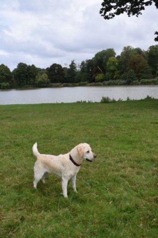 Dog walk at Corsham Court photo