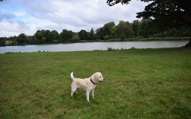 Corsham Court Dog walk in Wiltshire
