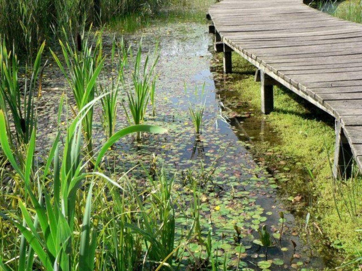 Cosmeston Lakes large photo 4
