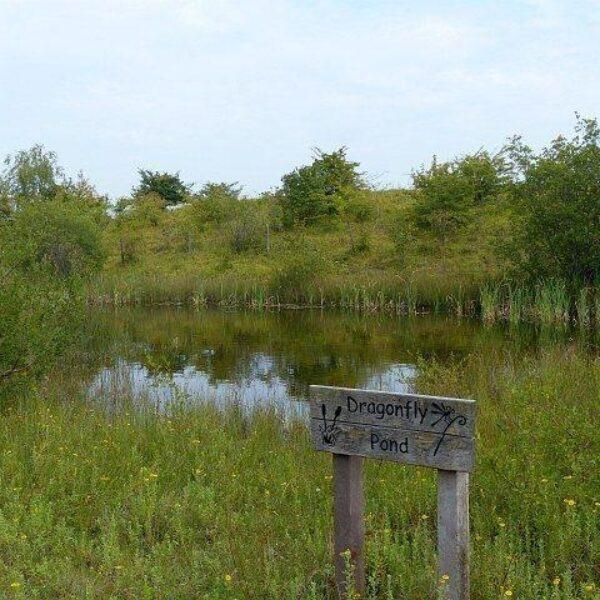 Cosmeston Park And Lakes photo 1