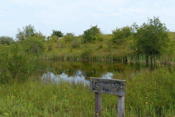 Cosmeston Park And Lakesphoto
