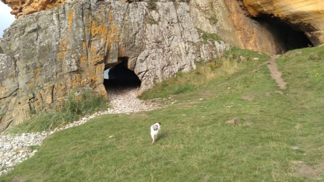 Dog walk at Covesea Caves