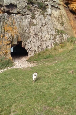 Dog walk at Covesea Caves photo