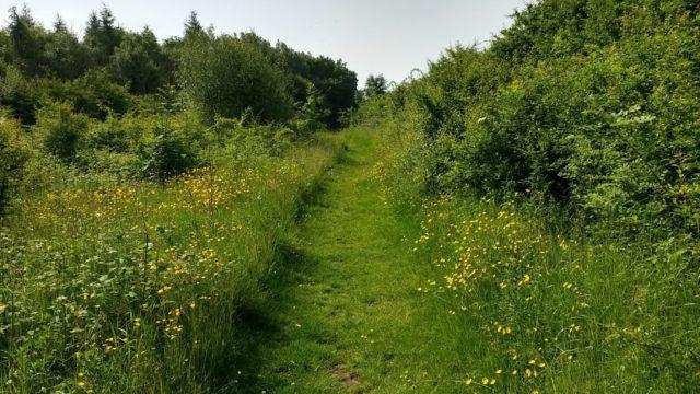 Dog walk at Cowpen Bewley Woodland Park
