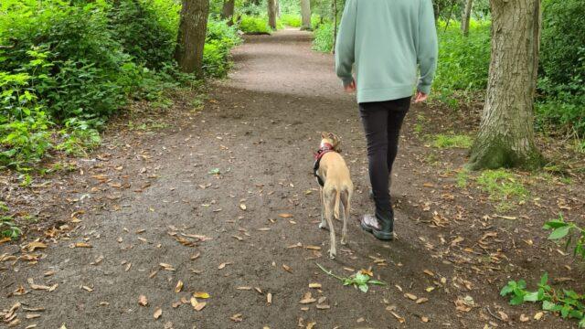 Dog walk at Crackley Woods