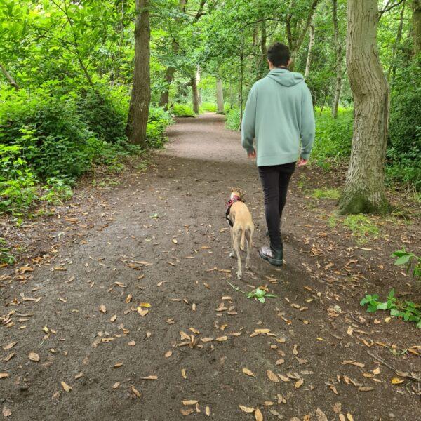 Crackley Woods photo 1