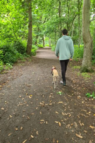Dog walk at Crackley Woods photo